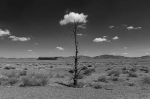 TREES 2  majid hojati