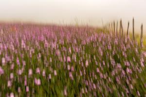 Pink flowers  majid hojati