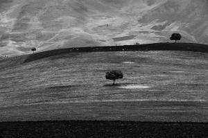 TREES 1  majid hojati
