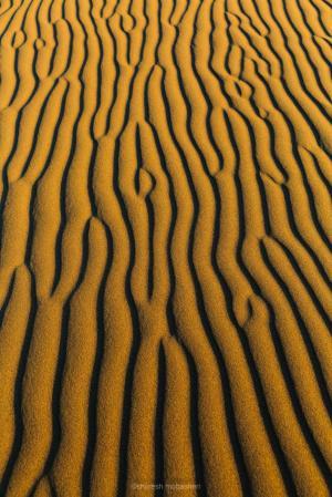 desert 2  shoresh mobasheri