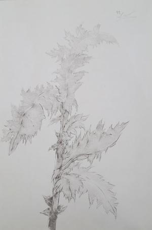 Untitled  Mehdi  Hoseini