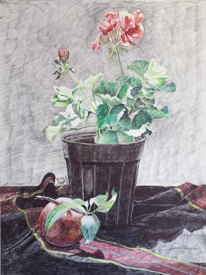 طبیعت بیجان گلدان شمعدانی از سارا پورفرزانه