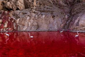 Red Lake  majid hojati
