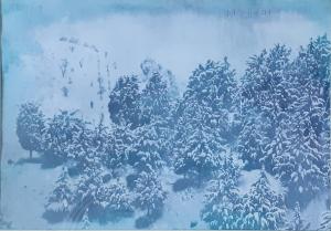 Pine  and Snow  farhad azizi