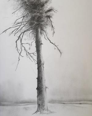 Trees Series 3  Shokoufeh Fallah