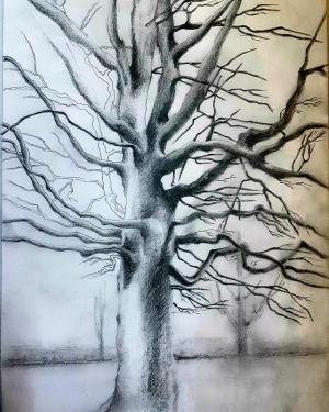 Trees Series 2  Shokoufeh Fallah