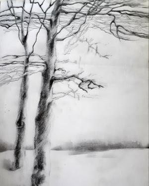 Trees Series 1  Shokoufeh Fallah