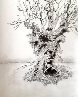 Trees Series 4  Shokoufeh Fallah